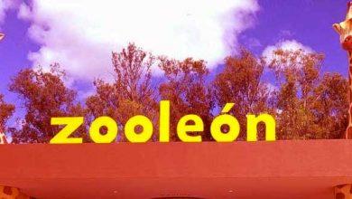 Photo of Corrupción en el Zoo
