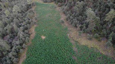 Photo of Nayarit: el jardín del H-2 que cuidaba 'El Padrino' Cienfuegos