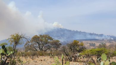 Photo of Extinguen incendio forestal en Jerécuaro