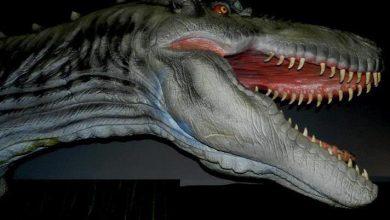 Photo of Dinosaurios en Guanajuato