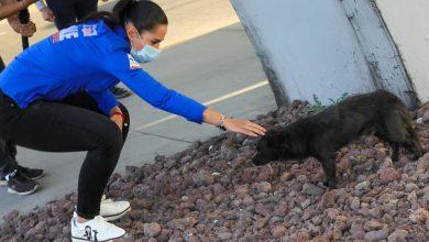 Photo of Ale Gutiérrez rescata a un perrito de la calle en plena campaña